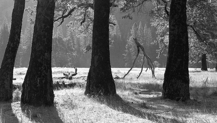 Yosemite, CA #1